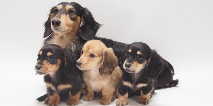 家族同然のペットが交通事故に…相手に慰謝料や治療費を請求できる?