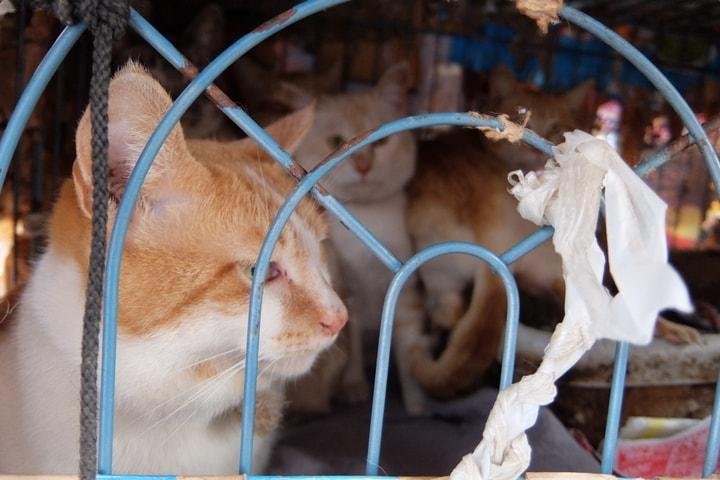 適正な飼育を放棄された猫たち(埼玉県三芳町・2018年2月26日撮影)
